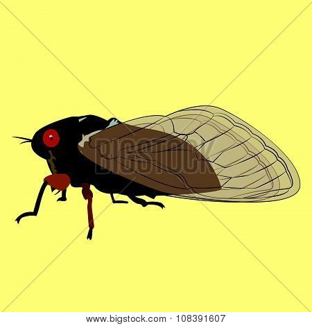 Vector Image Of A 17 Year Cicada Or Locust That Only Appears Every Seventeen Years