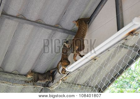 cats climbing on the roof