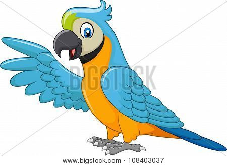 Cartoon macaw presenting isolated on white background