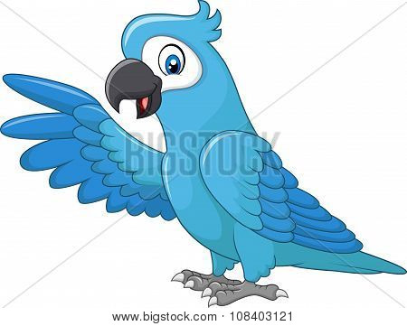 Cartoon funny blue macaw presenting isolated on white background
