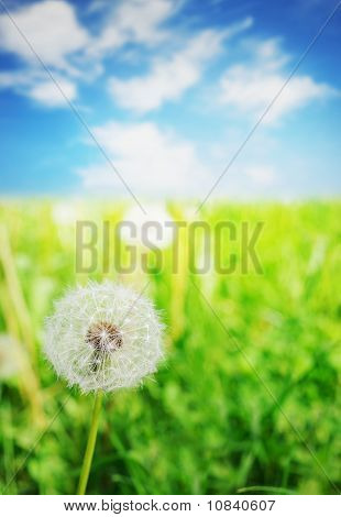 Fandelion flower over blue sky