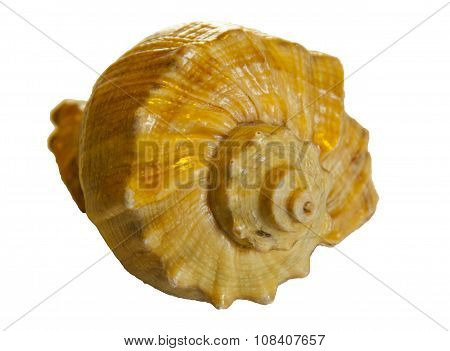 Small House Of A Mollusc