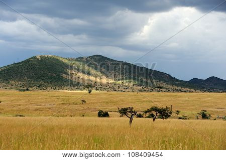 Savannah Landscape In The National Park Of Kenya