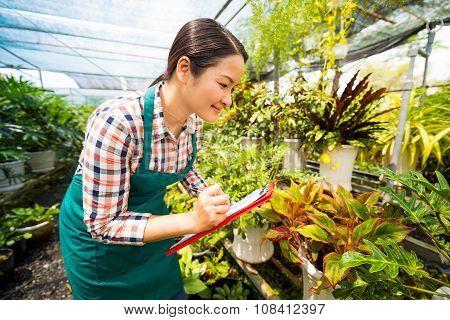 Working in plant nursery