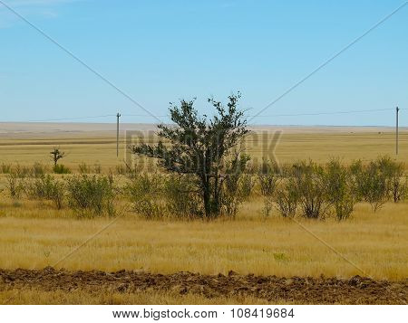 Steppe and trees, landscape in Kalmykia