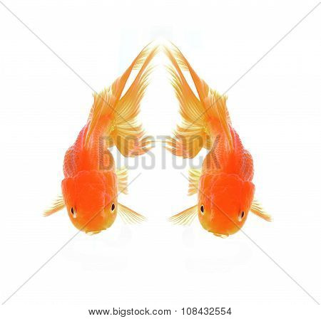 Two Red Goldfish Isolated On White Background