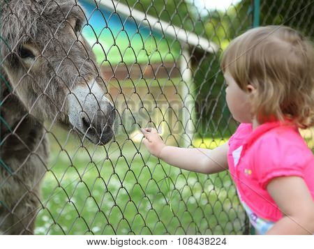 Girl With Donkey In Conversation