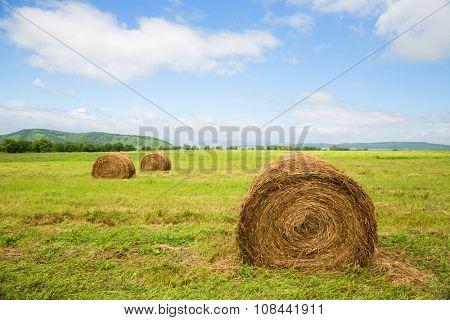 Haystacks in the field in summertime. Far East, Russia.