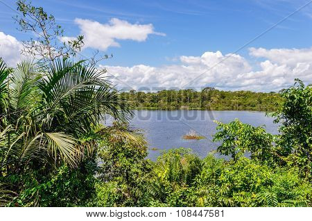 View Of The Lake In The Amazon Rainforest, Manaos, Brazil