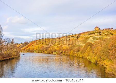 Vineyard In Autumn - Riversides
