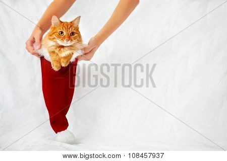 Women Holds A Red Christmas Hat With Ginger Cat In It. Cute Christmas Background With Place For Text