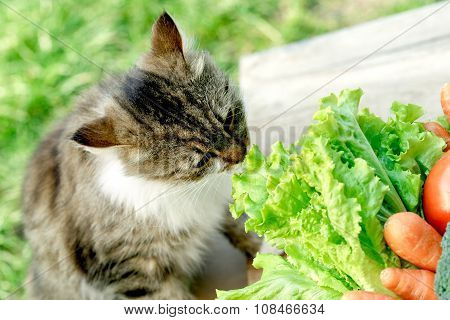 Pet - cat knows what is healthy food