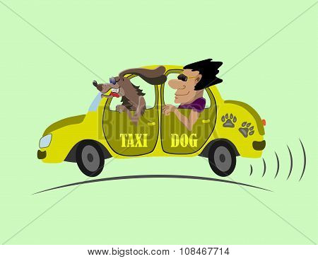 cheerful taxi and chauffeur dog