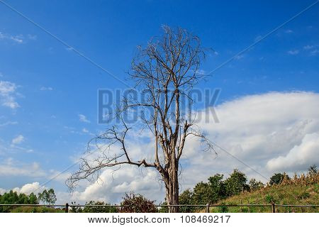 Dry Branches In The Blue Sky Background