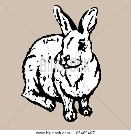 Sitting Cute White Rabbit
