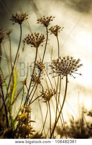 Wild Plants On The Blurred Background