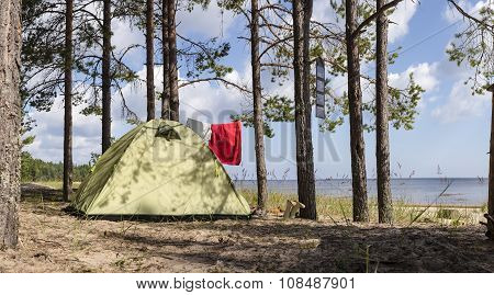 Tent Stands In A Pine Forest On The Sea Shore Near The Sandy Beach