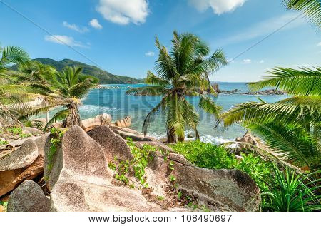 tropical beach with palm and turquoise sea