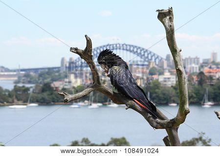 relaxing bird
