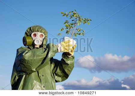 Person In Protective Clothes Holds Last Ficus