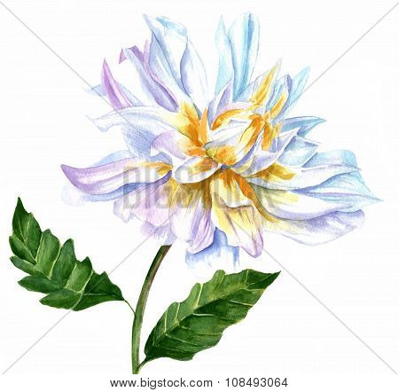 Vintage Watercolor Drawing Of White Dahlia Flower On White Background