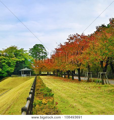Autumn park with colorful leaves