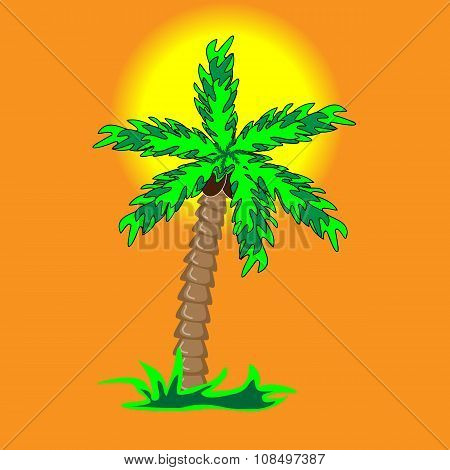The palm tree on the beach