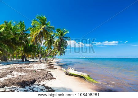 Untouched tropical beach with coconut palms in Dominican Republic