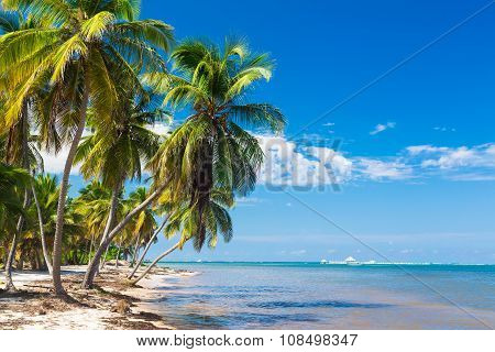 Untouched tropical beach on the Atlantic ocean in Dominican Republic