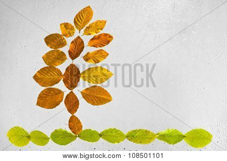 Abstract tree arranged with beech autumn leaves stuck to the window raindrops highlighted on a gray