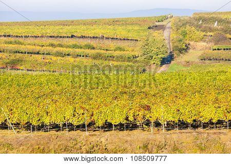 view of autumnal vineyards near Jetzelsdorf, Lower Austria, Austria