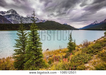 Autumn Bow Lake in Banff National Park, Canada. Azure waters of the lake are surrounded with picturesque Rocky Mountains and magnificent autumn yellow and orange vegetation