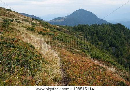 Autumn landscape. Path in the mountains. Cloudy day. Carpathians, Ukraine, Europe