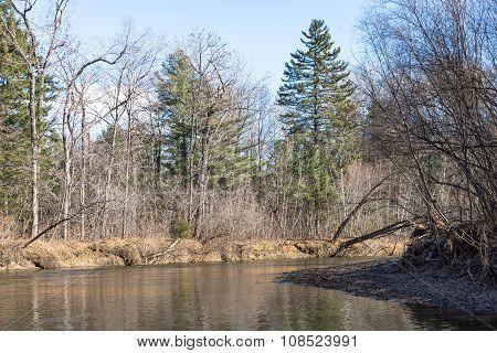 Fallen pine.