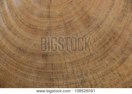 Close up hard wood