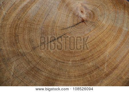 Wood on backgroud