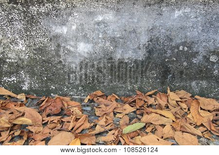 cement with autumn for the background
