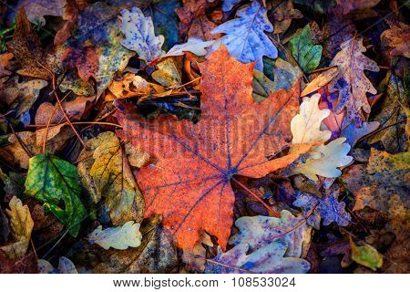 nice autumn leafage - abstract natural background