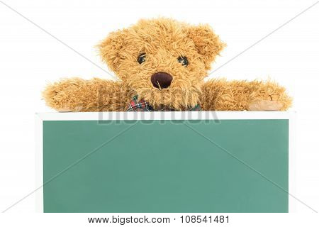 Teddy Bear With Empty Green Board