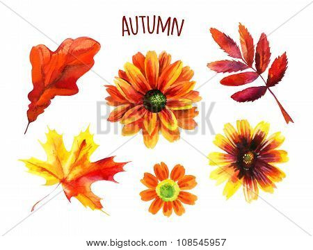 Watercolor Autumn Set Of Leaves And Flowers