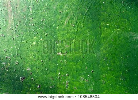 Green Painted Wall.
