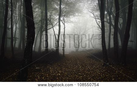 Mysterious trees in dark forest