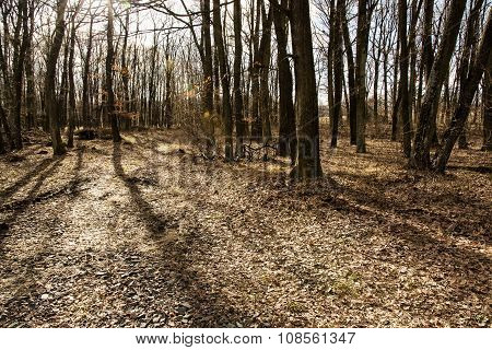 European Deciduous Forest In Autumn
