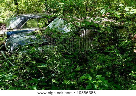 Wrecked Volkswagon Fastback In Woods