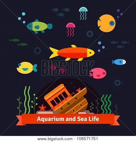 Underwater sea life. Aquarium