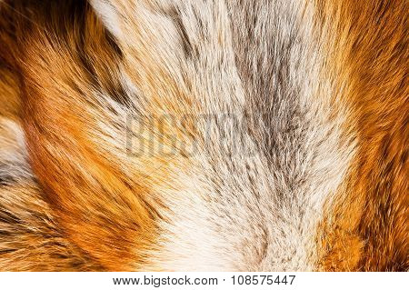 Foxy Fur. Background