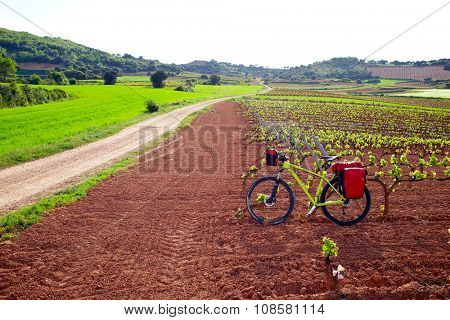 La Rioja vineyard fields biking in The Way of Saint James with bike