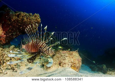 Lionfish and coral underwater