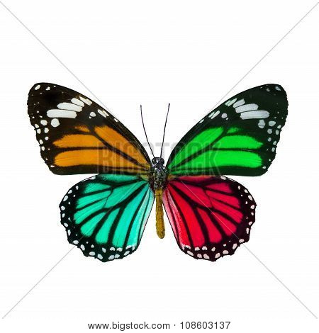 Colorful Butterfly , Danaus Genutia , Monarch Butterfly Isol