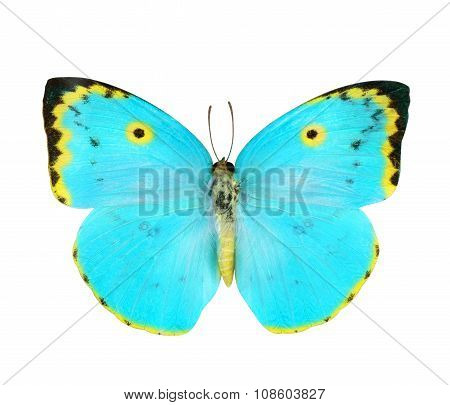 Blue And Yellow  Butterfly Isolated On White